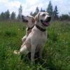 Собачий кашель - делимся оп... - последнее сообщение от Анастасия Засмужец