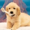 Мои собако-фотки - последнее сообщение от Южанка