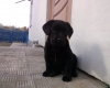 Блек 1,5 месяца